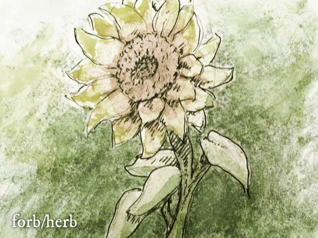 Serpentine Sunflower